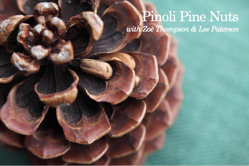 Pinoli Pine Nuts with Zoë Thompson & Lee Paterson