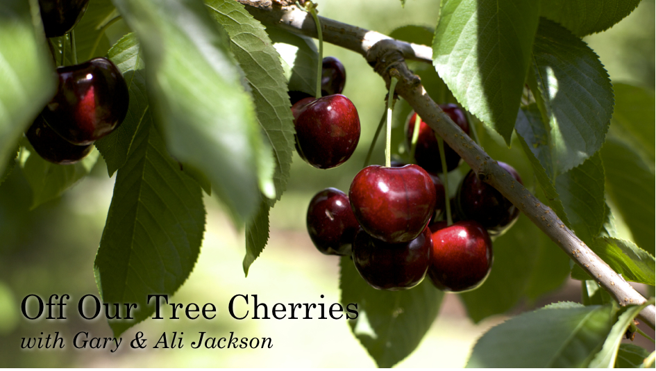Off Our Tree Cherries, with Gary & Ali Jackson
