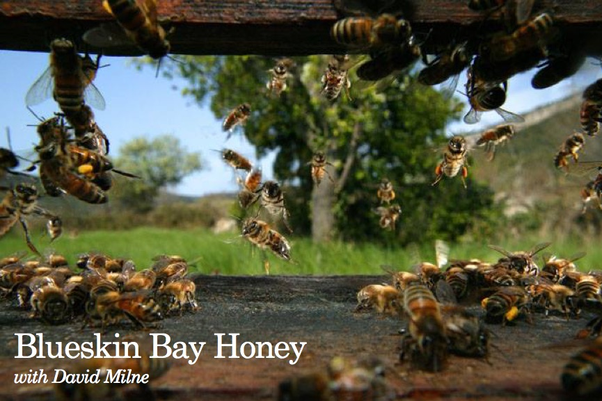 Blueskin Bay Honey with David Milne