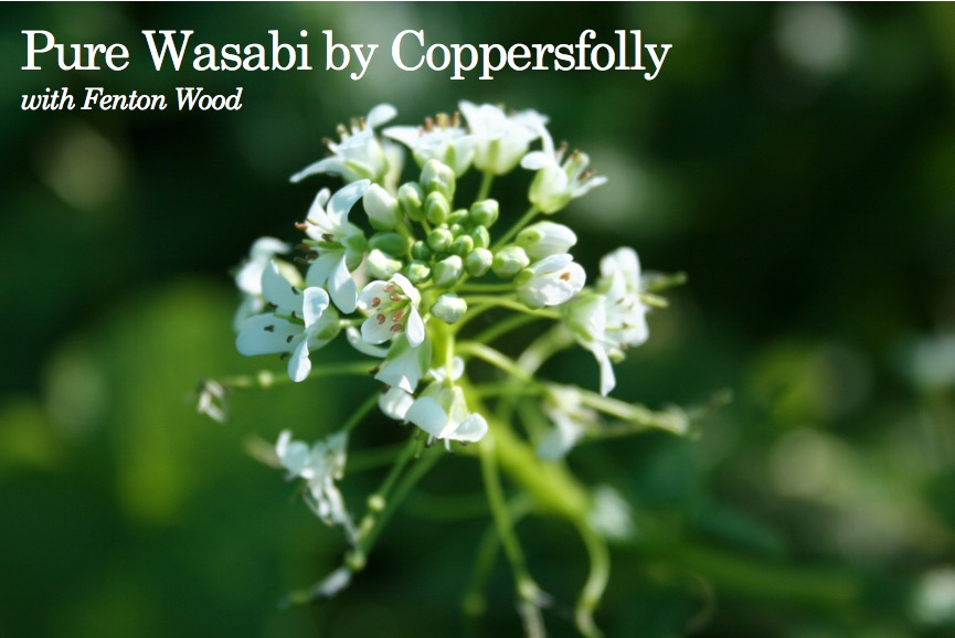 Coppersfolly Pure Wasabi with Fenton Wood