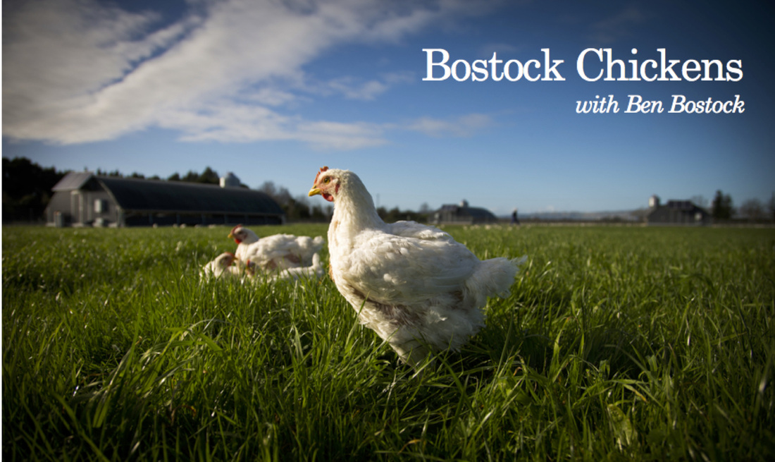 Bostock Chickens with Ben Bostock