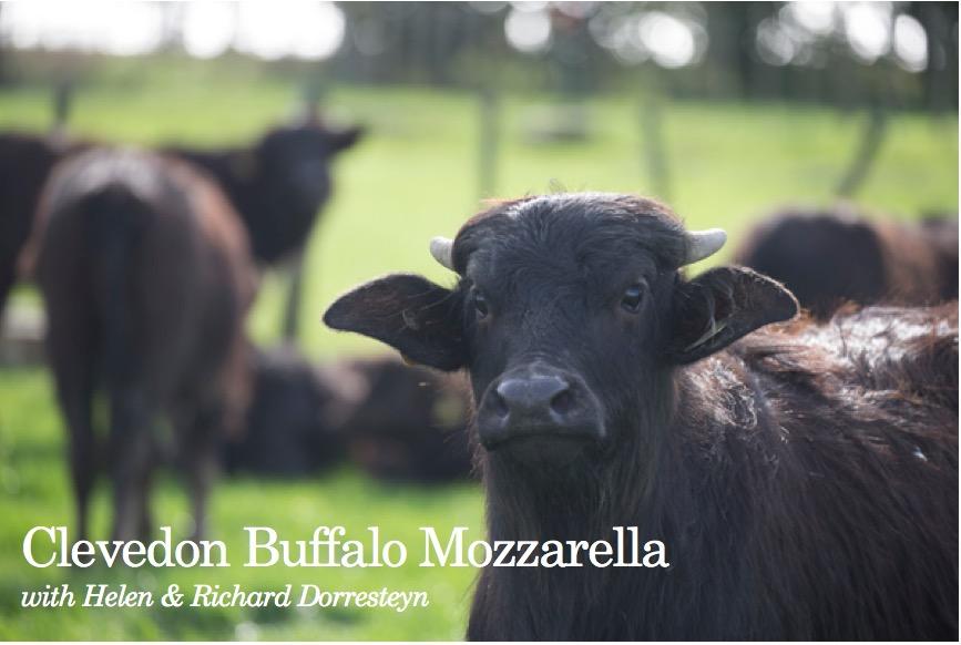 Clevedon Buffalo Mozzarella with Helen & Richard